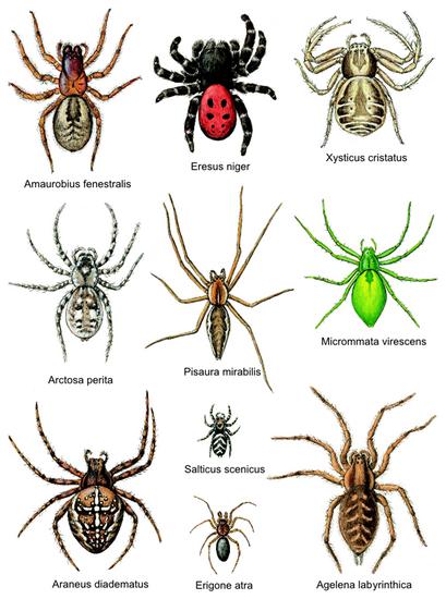 frygt for edderkopper